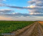 تفسر حلم رؤية الزراعة والزرع والمزروعات في المنام