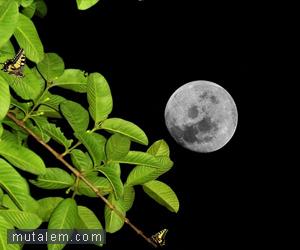 تفسير حلم رؤية القمر في المنام لابن سيرين